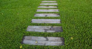 Rasen 310x165 - Rasen säen – so wird ein neuer Rasen richtig ausgesät