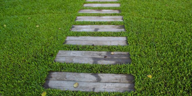 Rasen säen – so wird ein neuer Rasen richtig ausgesät